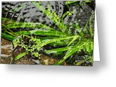 Pond Abstract II Greeting Card