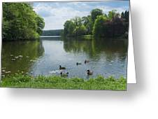 Pond And Ducks Greeting Card