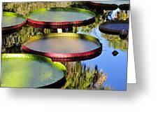 Pond Beauties Greeting Card