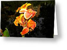 Pond Beauty Greeting Card