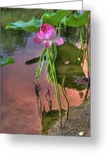 Pond Dreams10 Greeting Card