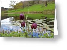 Pond Dwellers Greeting Card