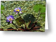 Pond Florals Greeting Card