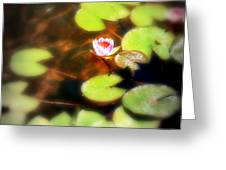 Pond Flower Greeting Card by Perry Webster