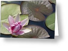 Pond Flower Greeting Card