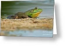 Pond Frog 2 Greeting Card