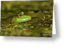 Pond Frog 3 Greeting Card