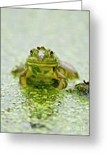 Pond Frog 7 Greeting Card