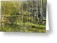 Pond In The Undergrowth. Greeting Card