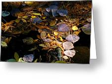 pond leaves RIV M 23 Greeting Card