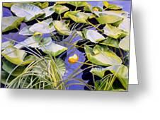 Pond Lilies Greeting Card