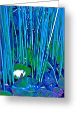 Pond Lily 6 Greeting Card