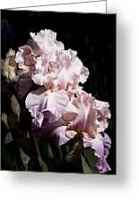 Pond Lily Iris  Greeting Card