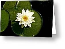 Pond Lily Greeting Card