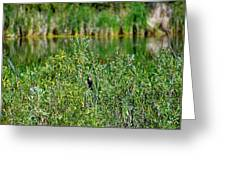 Pond On Cherry Creek Study 2 Greeting Card