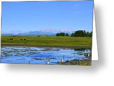 Pond Pasture And  Rocky Mountains Greeting Card