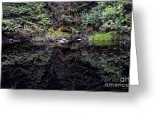 Pond Reflections -- Tongass National Forest Alaska Greeting Card