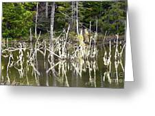 Pond Sticks Greeting Card