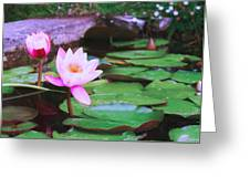 Pond With Water Lilly Flowers Greeting Card