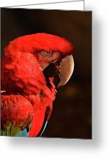 Pondering Parrot Greeting Card