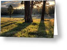 Ponderosa Pine Meadow Greeting Card
