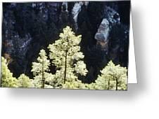Ponderosa Pines Greeting Card