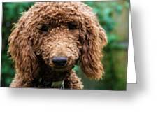 Poodle Pup Greeting Card by Jennifer Ancker
