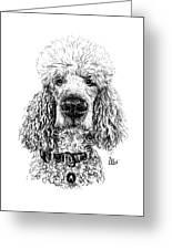 Poodle @standerdpoodle Greeting Card