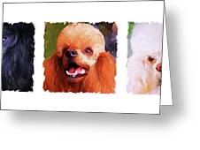 Poodle Trio Greeting Card by Jai Johnson