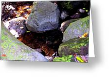 Pool In The Rainforest Greeting Card