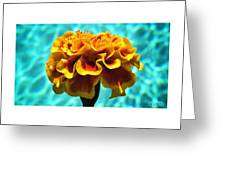 Pool Side Beauty Greeting Card