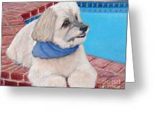 Poolside Puppy Greeting Card