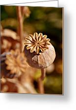 Poopy Seed Pod... Greeting Card