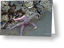 Poor Little Starfish Greeting Card