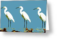 Pop Egrets Greeting Card