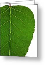 Poplar Leaf A Key To Biofuels Greeting Card