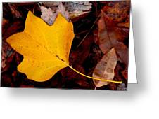 Poplar Leaf Greeting Card
