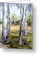 Poplar Tree   Greeting Card