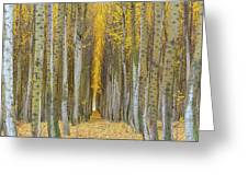 Poplar Tree Farm In Boardman Oregon In Fall Closeup Greeting Card