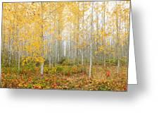Poplar Tree Grove In Fall Greeting Card