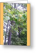 Poplar Tulip Tree Greeting Card