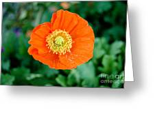Poppie Greeting Card