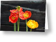 Poppies 17-01 Greeting Card