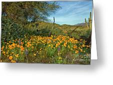 Poppies Abound Greeting Card