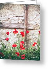 Poppies Against Wall Greeting Card
