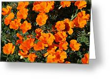 Poppies Alive Greeting Card