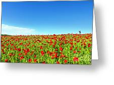 Poppies And A Photographer Greeting Card