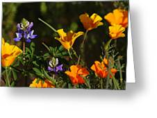 Poppies And Bluebells Greeting Card