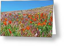 Poppies And Fiddleneck In Antelope Valley Ca Poppy Reserve Greeting Card