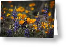 Poppies And Lupines  Greeting Card